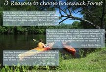Brunswick Forest Infographics