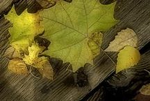 ~✿⊱╮ Shades of Green and Brown / by Belinda ~✿⊱╮