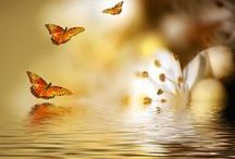 ~ ✿⊱╮ Shades of Yellow Golds and Browns / by Belinda ~✿⊱╮