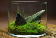 Terrariums / ~~A lyrical collection of terrariums, containers and  ideas to spark your own creative genius~~ / by Jenney Head