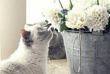 ~ ✿⊱ Belle Blanc / by Belinda ~✿⊱╮