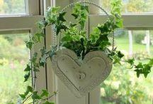 ♥.•:*´¨`*:•♥  Ivy Lane Cottage / by Belinda ~✿⊱╮
