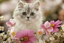 The Color of Spring / by Belinda ~✿⊱╮