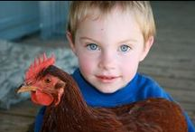 Kids Love Chickens, Chickens Love Kids / Pictures of children with chickens, ducks, or any other fowl