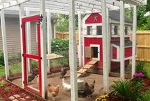 Chicken Coops / Homes That Our Chickens Love! / by Hoover's Hatchery