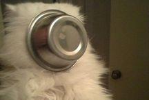 Cat Memes / Get ready