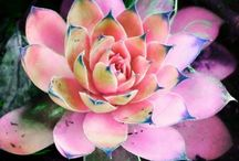 Succulents / by Ellen Serrano