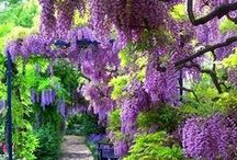 DIY gardening tips / by Madeline Dillard