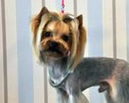 Small Dog Grooming Styles / Doggie Doo's / Grooming Styles