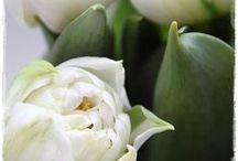 fiori [flowers]
