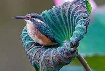 WONDERFUL NATURE / Natures pure beaty and wonders