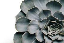 SucCulent & other plants