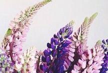 GARDEN & FLOWERS / ...