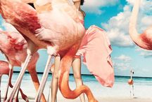 Made in Pink Flamingo / Beautiful home interiors, accessories and photography featuring perfectly pink flamingos.