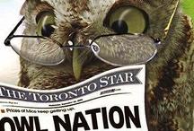 owls pöllöt