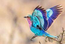 Birds etc / by Janet Erickson