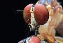 insects | arachnids / by :: ::