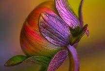 Flower Bomb / Eksplozja koloru, potęga natury...