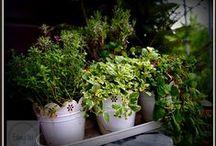 Mój balkonowy ogródek /inspiracje / Zdjęcia z mojego ogródka balkonowego oraz inspiracje znalezione w sieci.