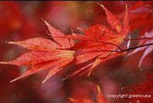 great autumn colour