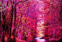 Fantasy - Autumn