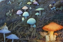 shrooms and its world