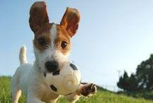 Pets! / We adore animals!