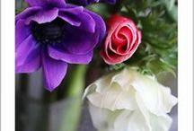 ショップ季節の花;1月・2月・3月 / 花屋・花教室のプティークール・エームに入荷の季節の花をUPします。