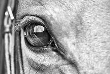 Dierenfotografie / Paard/ruiter en huisdier reportages vanaf geboorte tot en met een afscheid