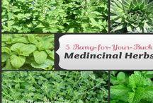 My Medicinal Garden