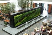 Indoor greenwall and vertical gardens