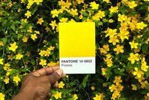 Pantone / Colors