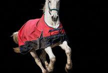 Paarden portfolio foto's van Bergsma-Lifestyle / Voor particulieren en bedrijven