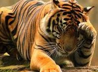 Animals - Wild Warmer Climes / Wild animals from more tropic countries