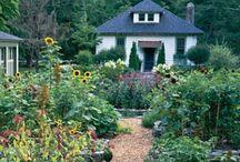 homestead ↟ / homesteading, urban homestead, natural living, diy, permaculture, fermentation, homemade, hand made, home grown, gardening