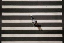 Zebra Research / Inspiration