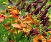 Garden Plant Combinations / Inspiration for plant groupings by colour, bloom time, plant shapes, texture & size