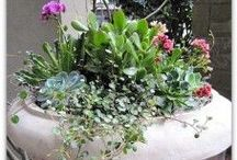 Garden Sedums and Succulents / Sedums and succulent perennials and some annuals in planters and in gardens