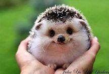 Furry friends! / Adorable animals / by Jennifer Savinelli