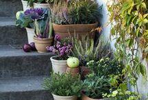 Garden Container Gardening