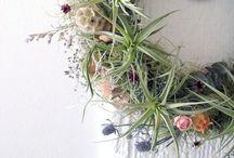 flora ↟ epiphytes / Air plants, living wall, tropical plants, houseplants, epiphytic plants, tillandsia