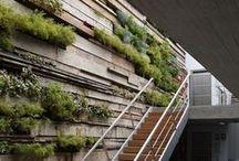 garden ↟ green walls / Green walls, vertical gardens, vertical gardening, growing vertically, small space gardens, urban gardening, indoor gardens