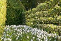 garden ↟ espalier / Espalier, training trees, kitchen gardens, formal gardens, fruit trees, small space gardening, potager garden, Belgian fence, orchards, vineyards