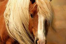Heppoja - Horses / Kauniita ja uljaita...