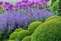 garden ↟ plant / gardens, planting design, garden design, formal garden, naturalistic planting, landscape design, landscape architecture, plants, flowers