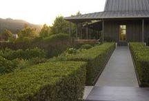 garden ↟ clipped / Formal gardens, espalier, hedges, topiary, preached, modern gardens, minimalist garden, landscape architecture, landscape design