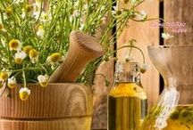 Herbs Healing Herbs & Medicine