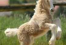 Horse, Horses, Colt, Pony