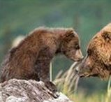 Animals - Wild Northern Climes / Wild animals from the northern hemisphere