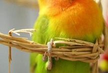 Animals - Pets / family pets, fur or feathered babies